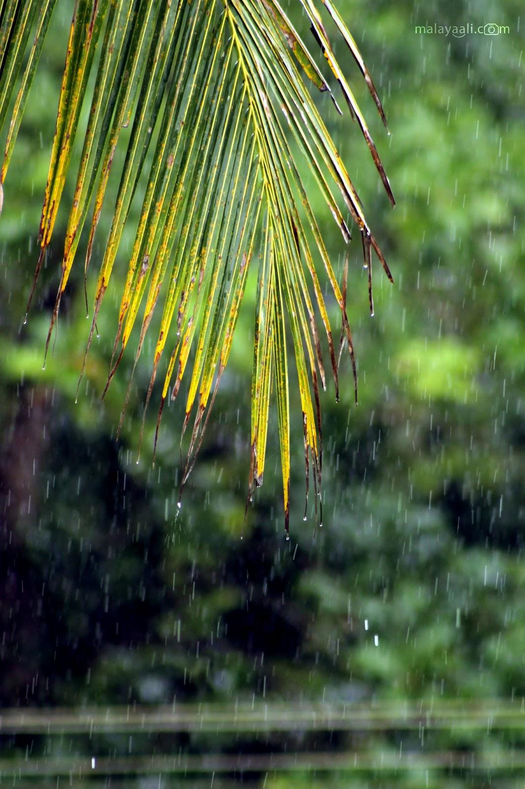 Malayali Peringode, Mazha, Monsoon, Rain, Kerala, മലയാളി പെരിങ്ങോട്, മഴ, മഴക്കാലം, മഴചിത്രം, സുകൃതം, Sukrutham