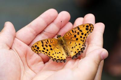 kupu-kupu dan manusia