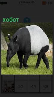 1100 слов на поляне пасется животное с хоботом 36 уровень