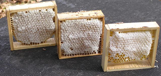 подмор пчелиный что это такое
