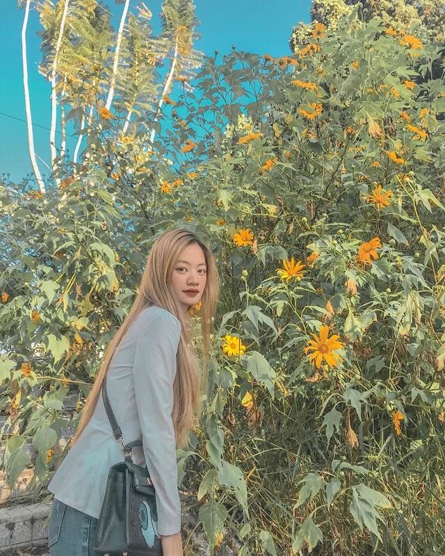 Go to Da Lat taking check-in in sun wildflower season