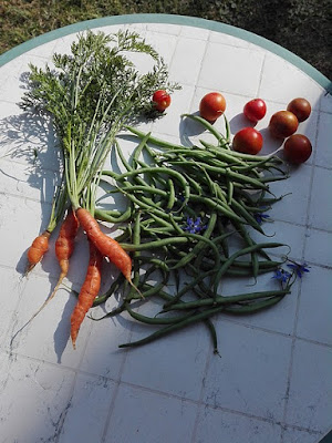 Ottobre nell'orto di Elle e Alli: fagiolini, carote, pomodorini.