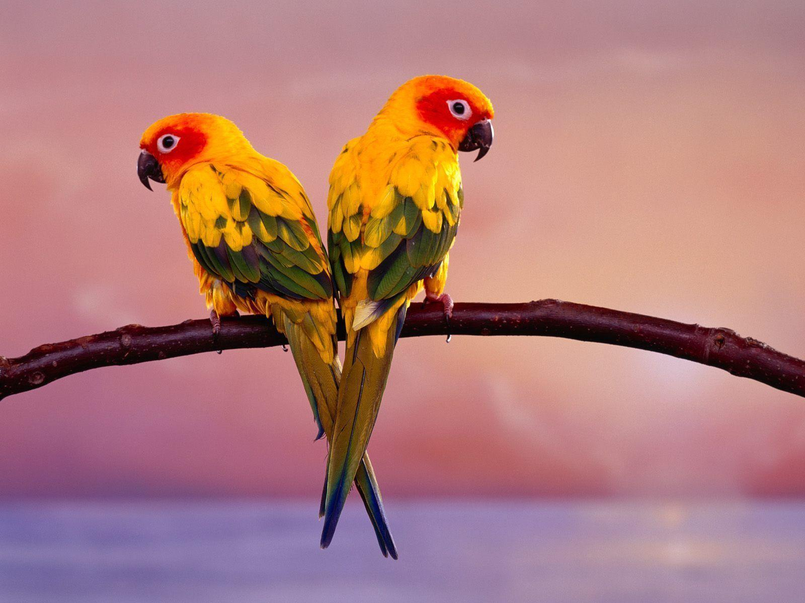 Birds Desktop Wallpapers HD wallpaper
