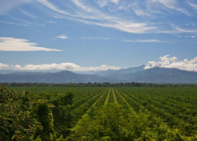 Corte falla a favor de campesinos desplazados de la hacienda Bellacruz en Cesar