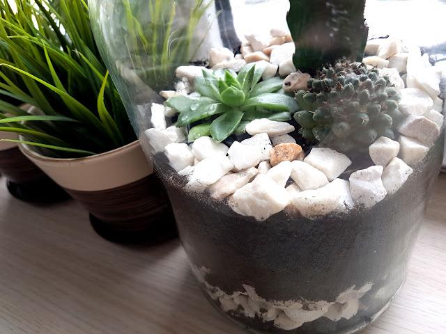 ogródek w słoiku - ogródek w szkle - las w słoiku - pielęgnacja kaktusów