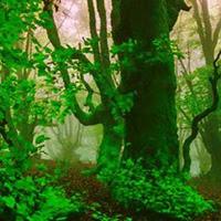 WowEscape-Plantation Leaf…
