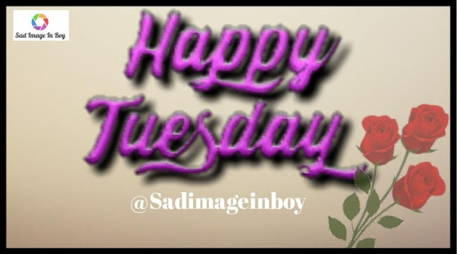 Happy Tuesday images   tuesday quotes, tuesday morning gif, good tuesday morning gif