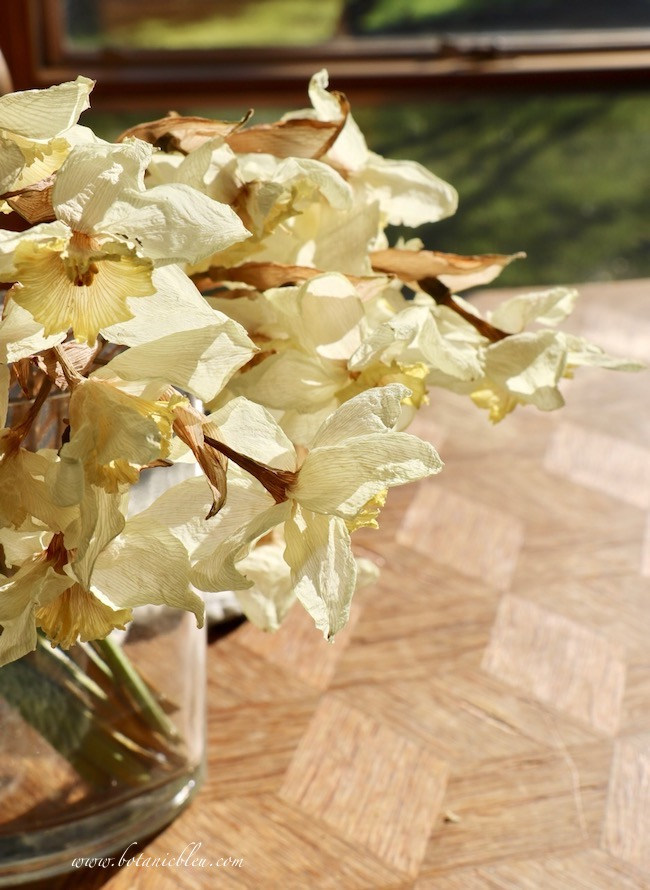 Dried narcissus spring bouquet