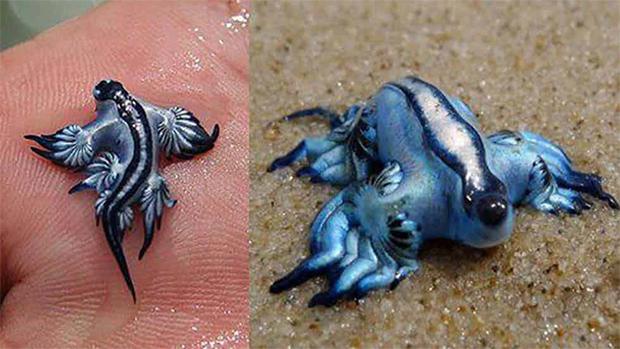 ساحلوں سے دریافت ہونے والی عجیب اور پراسرار مخلوقات