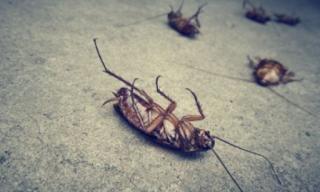 Επιδρομή από κατσαρίδες - Στη Λάρισα καταγγέλλουν σοβαρό πρόβλημα