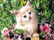 New Baby Cats Animal Hd 53