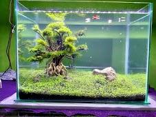 10 Cara membuat Aquascape Mudah Untuk Pemula