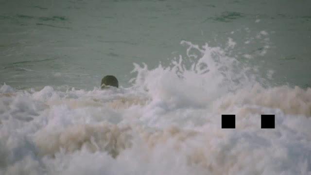 Toxic Shark imagenes HD