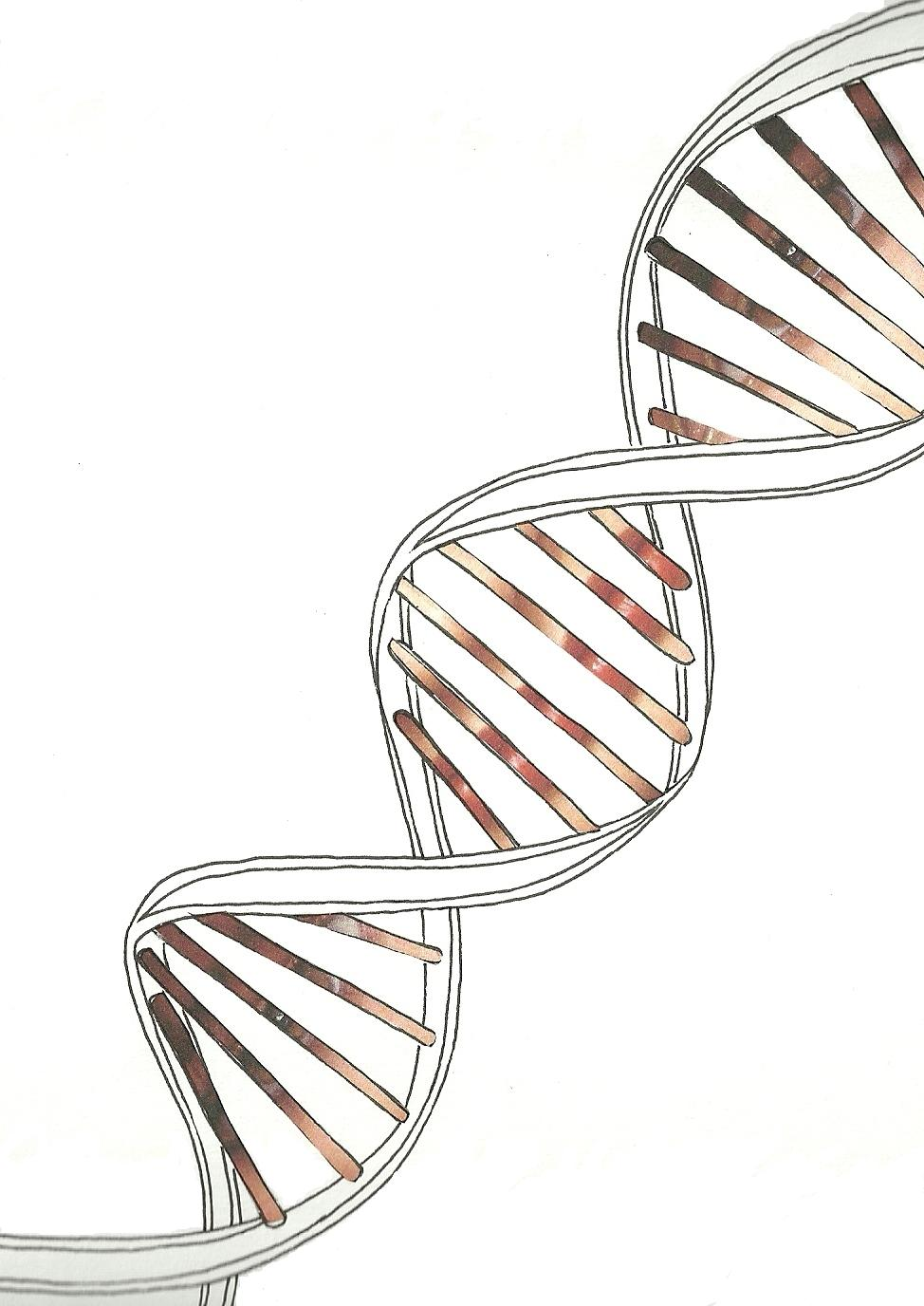 It is an image of Impertinent Drawing Of Dna