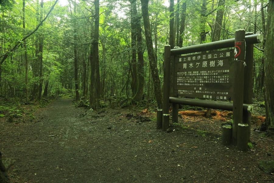 el-bosque-siniestro