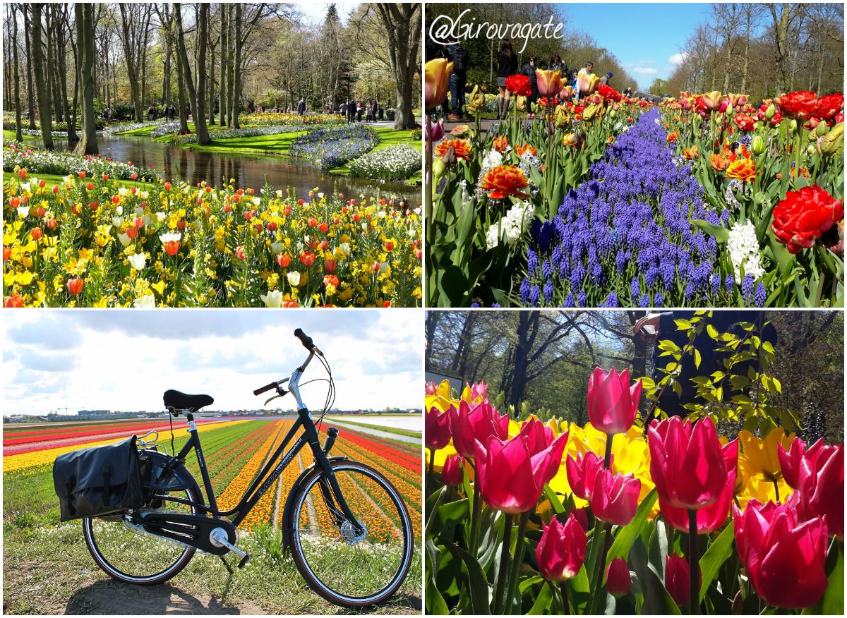giardino Keukenhof Olanda tulipani