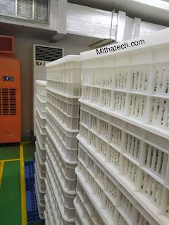 Máy hút ẩm phòng ủ sing gum