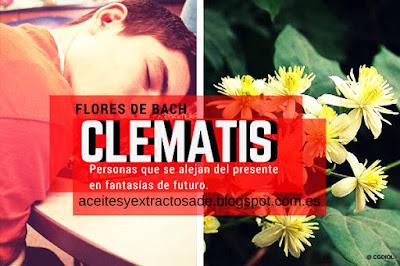 Clematis, Flores de Bach para los que han perdido un ser querido, estado de somnolencia