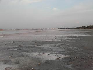 Larnaka Salt Lake, showing salt at the shore