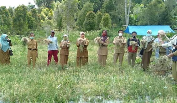 Wow, Produksi Bawang Merah di Sinjai Dalam 1 Hektare Capai 6,8 Ton