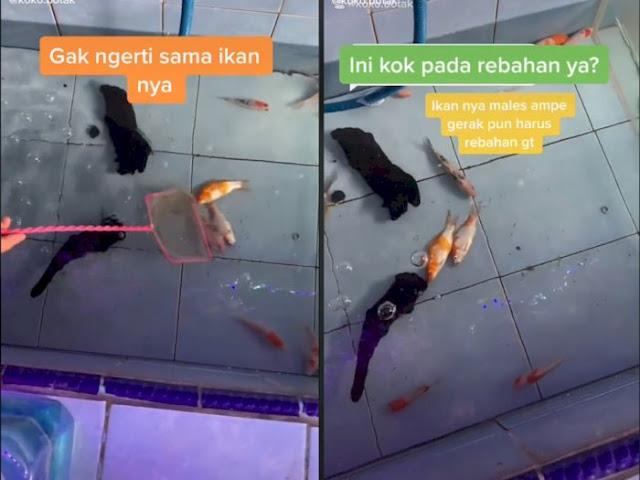 Viral! Ada Ikan Hobi Rebahan di Dasar Kolam, Netizen Heran Campur Tercengang