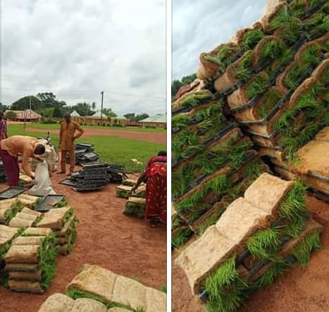 More farmers in Yala take Delivery of Rice Seedlings From Ayade