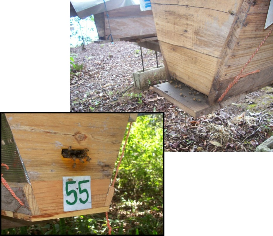 One Of My Top Bar Hives With A Two Inch Landing Board At The Main Front  Entrance But Also A Smaller Back Entrance. This Secondary Entrance  Sometimes Becomes ...