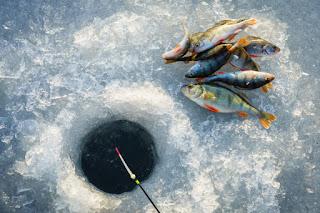 donmuş balık