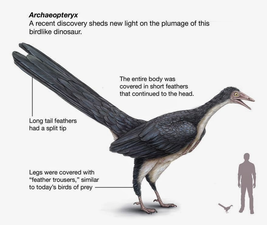 write a discursive essay about archaeopteryx