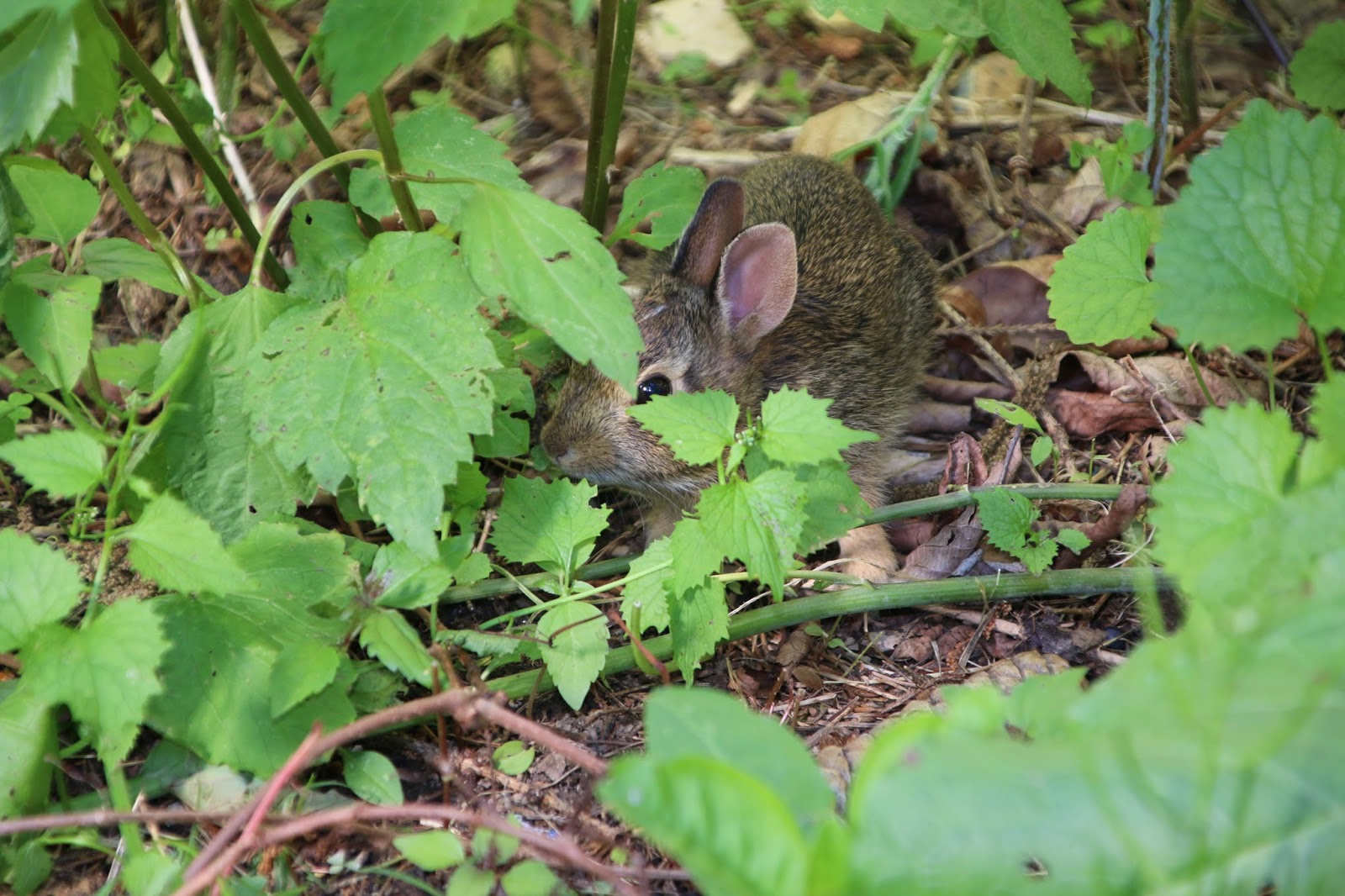 baby bunny in our backyard madison taylor