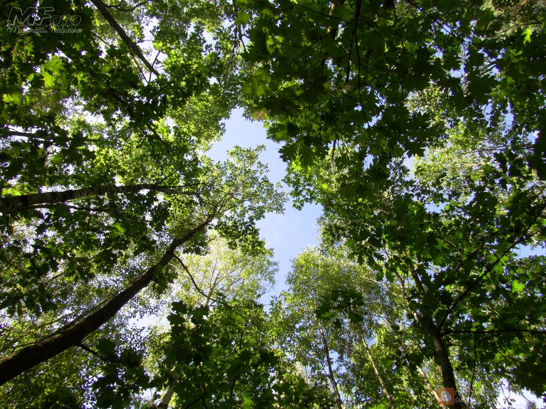 Podążając leśnymi ścieżkami