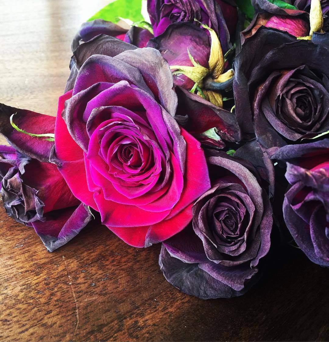 40 Gambar Bunga Rose Untuk Wallpaper Ponsel