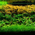 The Best Freshwater Aquarium Plants
