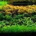 The Best Freshwater Aquarium Plants