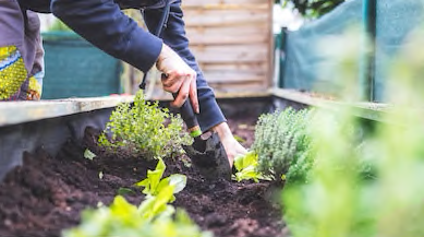 Learn How To Start URBAN AGRICULTURE AND FOOD SYSTEMS BREAKTHROUGHS IN RESEARCH AND PRACTICE