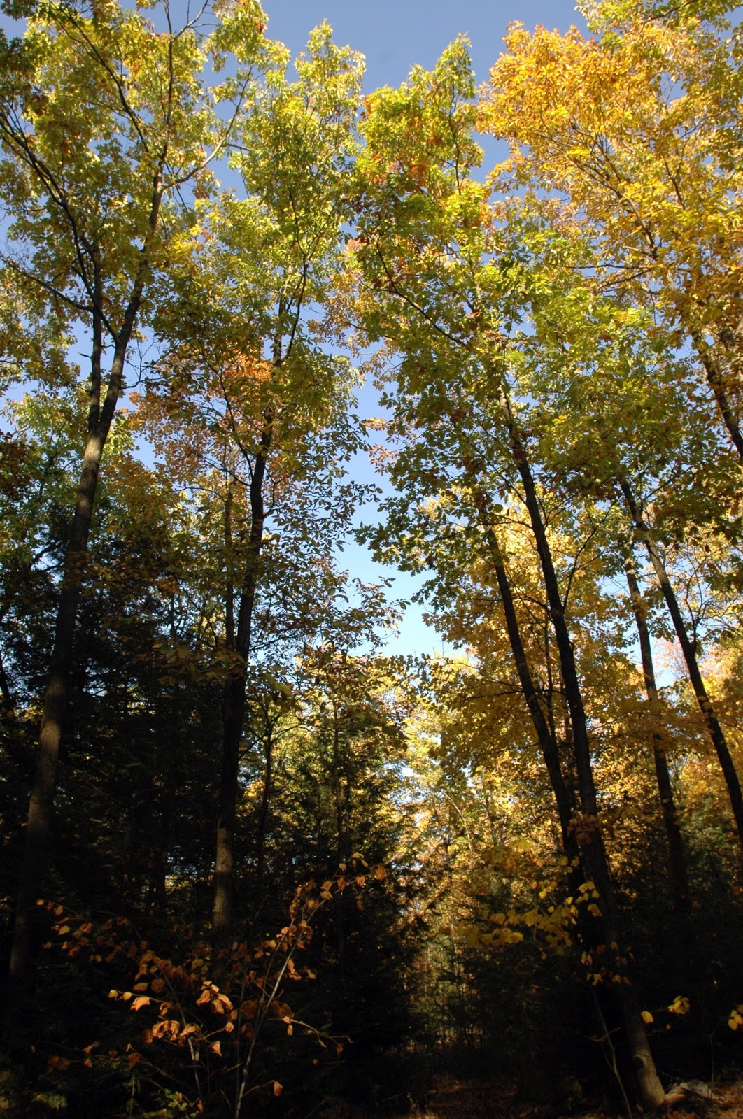 central pennsylvania forestry woods in your backyard workshop