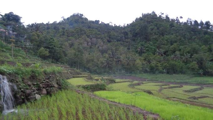 Landscape sawah dari Paguyangan, Brebes.