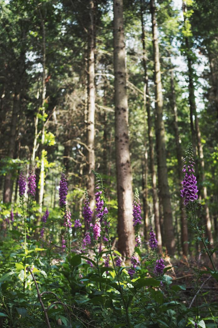 Bain de forêt en Alsace : initiation au shinrin-yoku