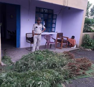 धनोरा चौकी पुलिस को मिली बड़ी सफलता, 78 किलो गांजा किया जप्त, आरोपी गिरफ्तार