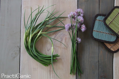Garlic Scapes and Chives