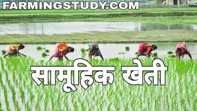 सामूहिक खेती किसे कहते है, सामूहिक कृषि, collective farming in hindi सामूहिक खेती का अर्थ एवं परिभाषा, सामूहिक खेती की प्रणालियां, farmingstudy