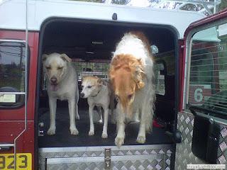 transporte de cães em veículos altos