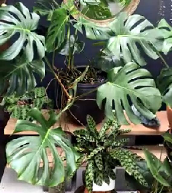 Las Plantas de Interior Más Usadas del Mundo