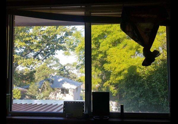 Bên ngoài cửa sổ của mình tầm nhìn với bầu trời khá hạn chế vì có nhiều cây cối che khuất