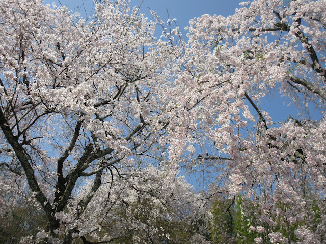 Templo Tenryu-Ji, jardín zen Tenryu-Ji, Kyoto, Kioto, Japón, Japan, Elisa N, Blog Viajes, Lifestyle, Travel, TravelBlogger, Blog Turismo, Viajes, Fotos, Blog LifeStyle, Elisa Argentina, Cerezos