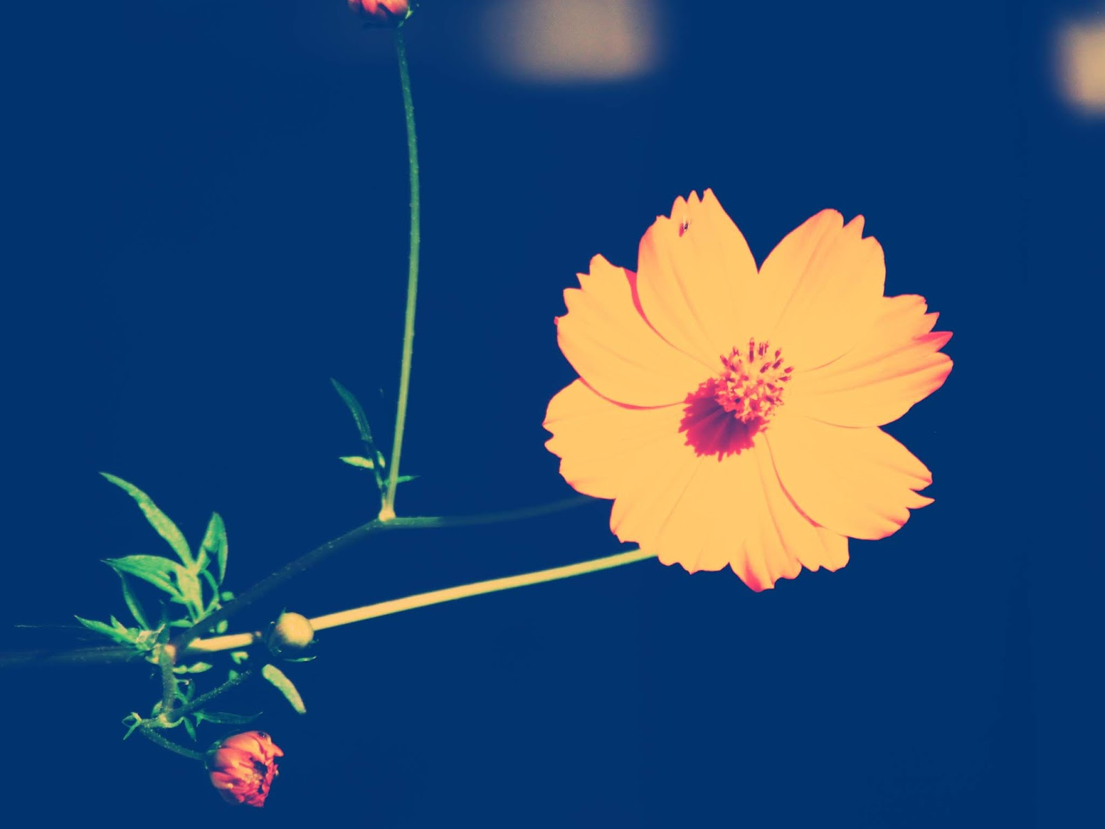 An orange fairytale flower in a botanical garden with a blue dream haze in an enchanted forest of Florida