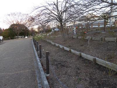 打上川治水緑地 バラの花壇