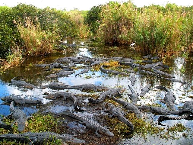 Công viên quốc gia Everglades
