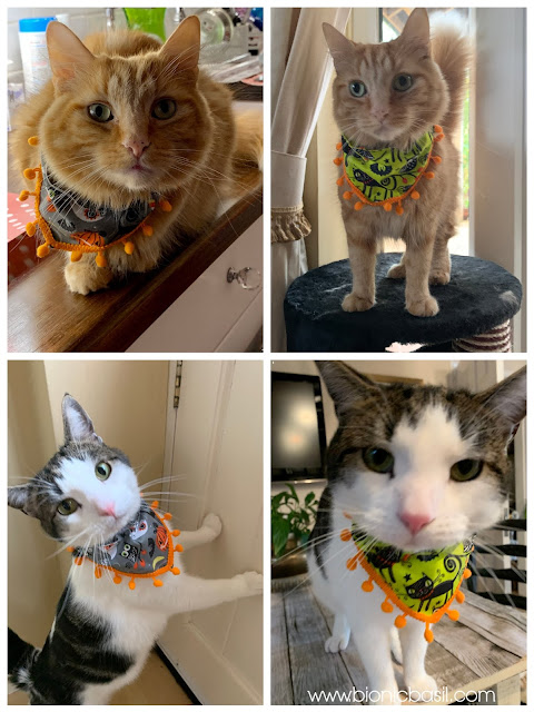 The Mini Pumpkin Trimmed Bandanna on Creepy Crafting with Cats ©BionicBasil®Halloween Special Fudge and Melvyn Modelling the Bandannas