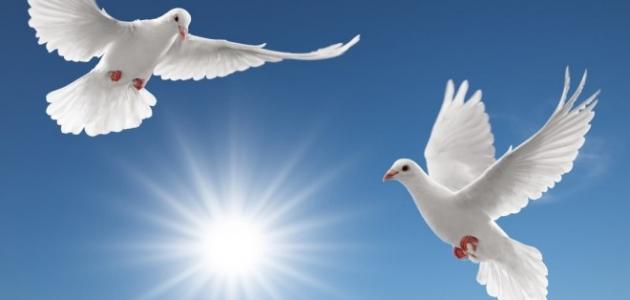 أفضل موضوع تعبير عن السلام بالعناصر يصلح لجميع الصفوف 2018